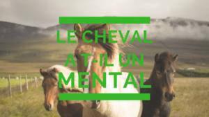 Le cheval a t'il un mental
