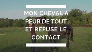 mon cheval a peur de tout et refuse le contact