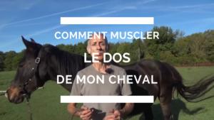 comment muscler le dos de son cheval