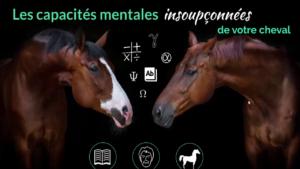 Les capacités mentales insoupçonnées de votre cheval
