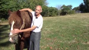 Pourquoi vous devez absolument travailler la souplesse de vos chevaux
