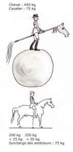 répartition du poids du cheval et du cavalier entre l'avant et l'arrière main