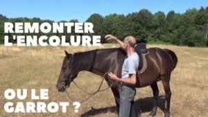 Faut-il remonter l'encolure ou le garrot du cheval