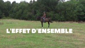 l'effet d'ensemble en équitation