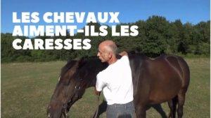 Les chevaux aiment-ils les caresses