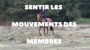 Comment sentir les mouvements des membres du cheval